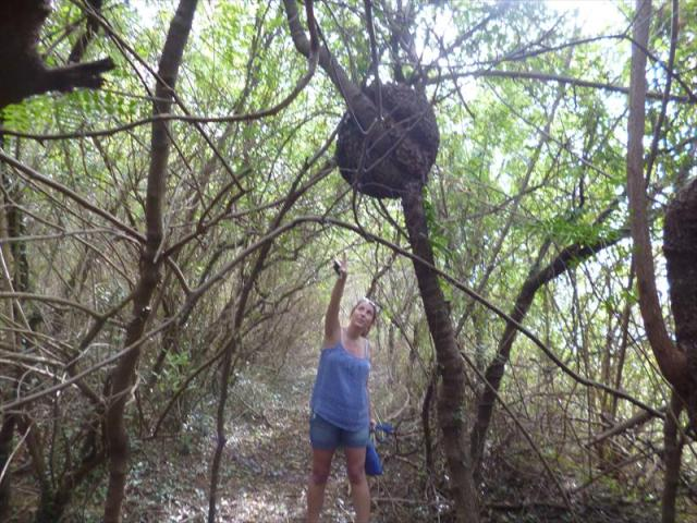 Discovering a Termite Nest